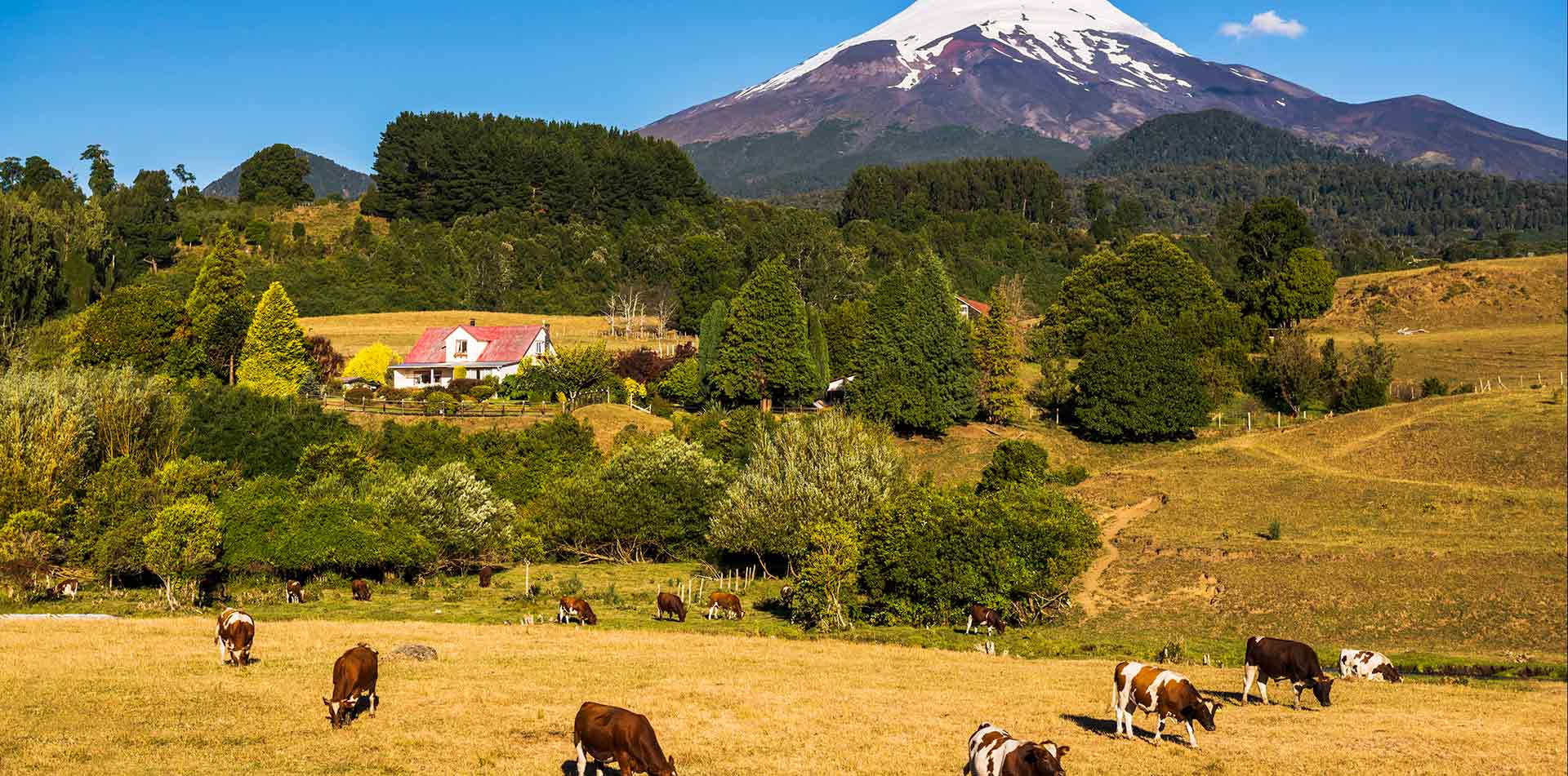 South America Chile Cattle Herd Cowboys Gauchos Ranch Road Tour - luxury vacation destinations