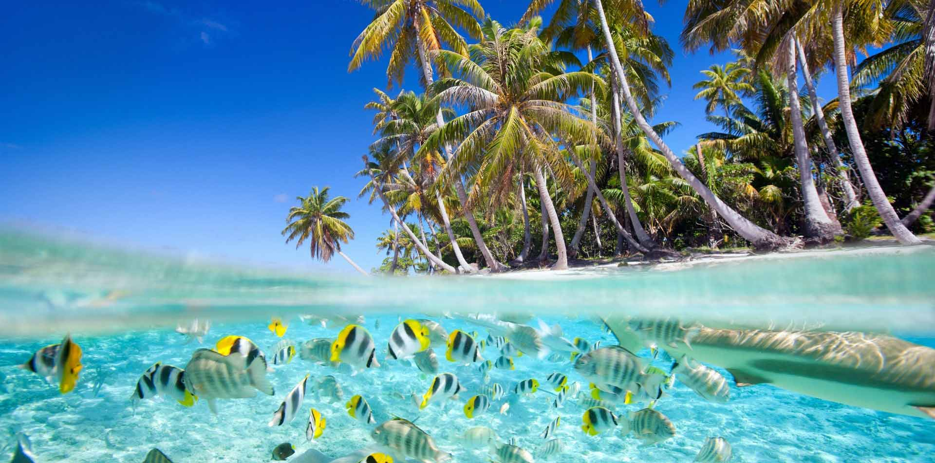 South Pacific Tahiti colorful fish clear water tropical island lush palm trees - luxury vacation destinations