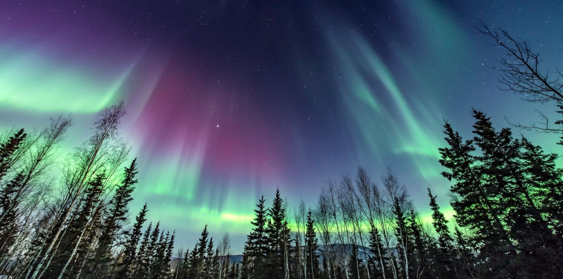 northern lights alaska pine trees