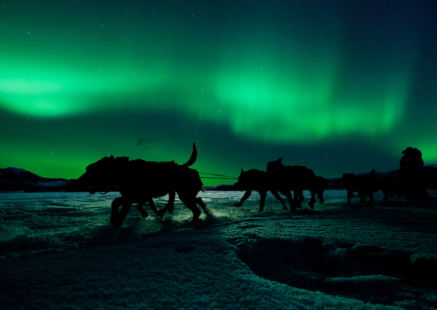 Silhouette of sled dog team pulling sleigh with musher under the northern lights
